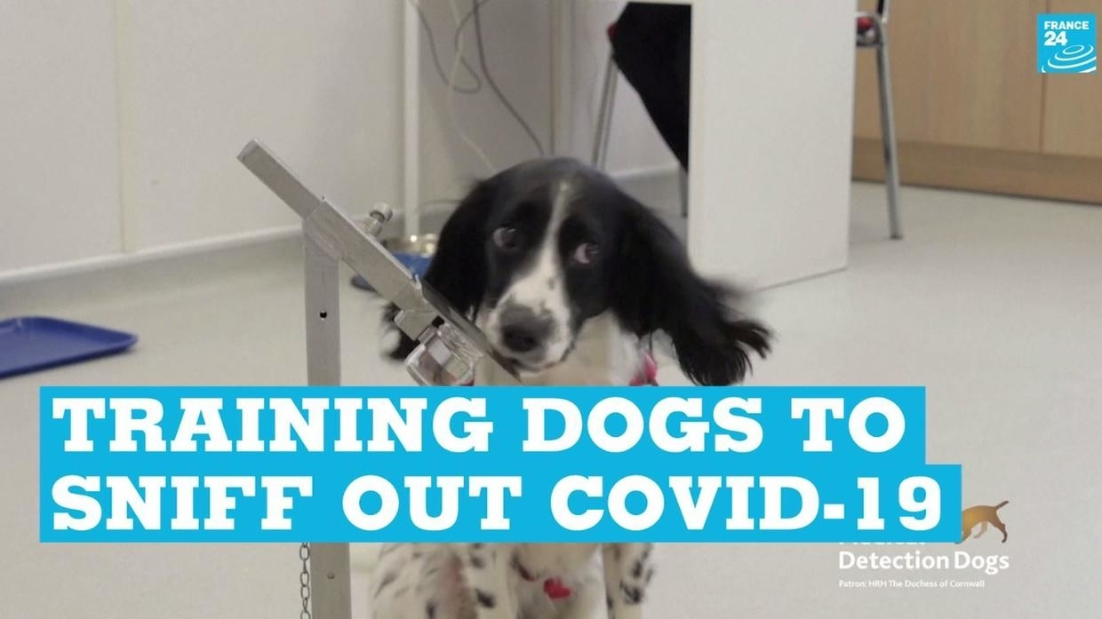 Photo of Training dogs to sniff out Covid-19