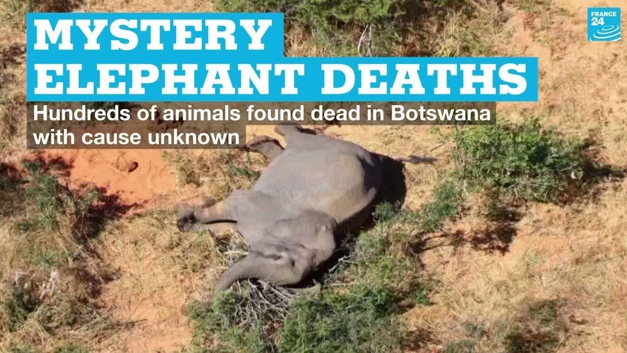 Photo of Mystery of hundreds of elephants found dead in Botswana