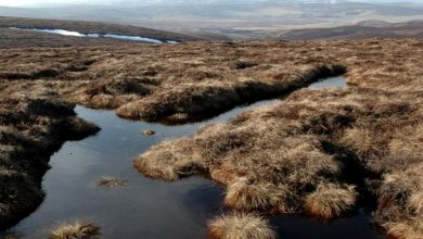 Photo of Ban on burning grouse moor peatlands 'not enough to tackle climate crisis'
